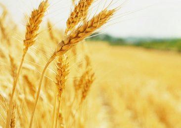 agricoltura_3