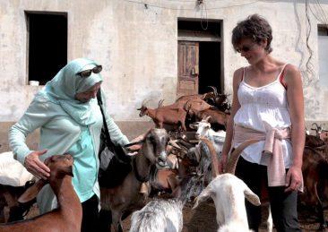 agricoltura_siria_piemonte-liguria