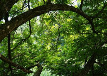 alberi_2
