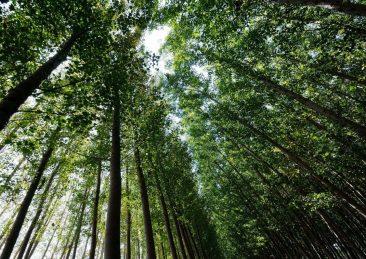 alberi_bosco