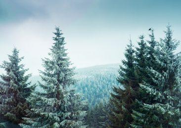 alberi_foreste