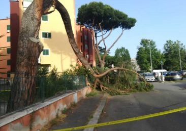 albero-caduto-san-basilio