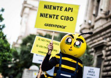 api-greenpeace6-1