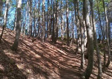 boschi alberi bosco montagna