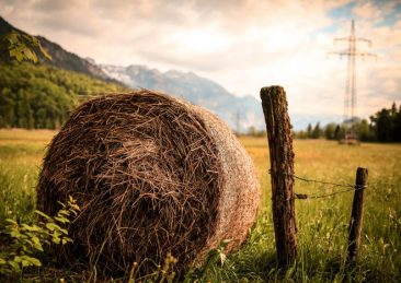 campagna_agricoltura