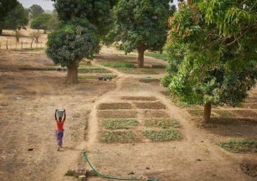 coltivatrici-mali