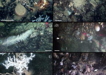 coralli_sottomarino_canyon-2