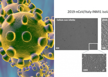 coronavirus-spallanzani