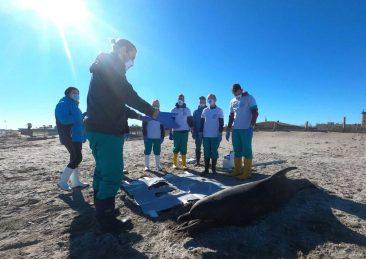 delfino spiaggiato venezia analisi post mortem