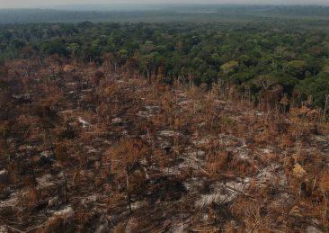 deforestazione amazzonia(1)