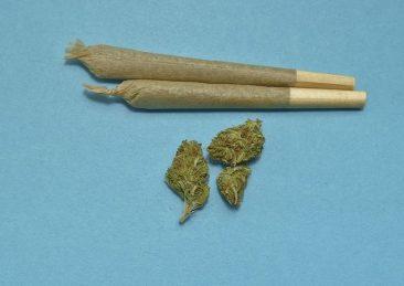 droga-cannabis