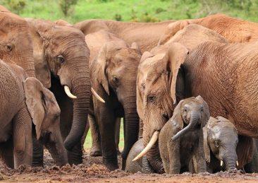 elephant-4736008_1280