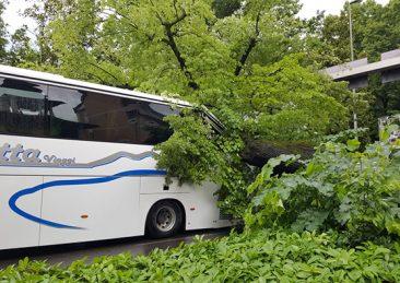 firenze_albero-su-bus-6