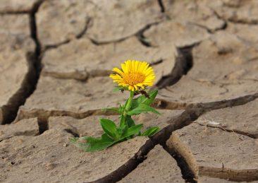 fiore giallo resistere resistenza