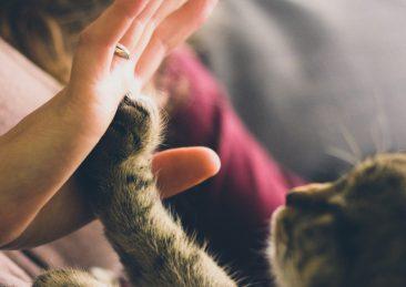 gatti_animali