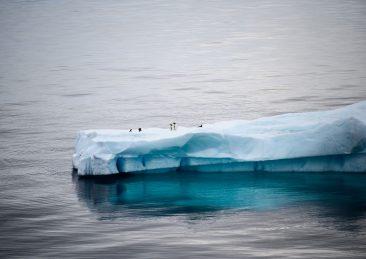 ghiaccio antartide pinguini