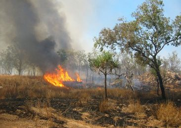 incendi_Australia