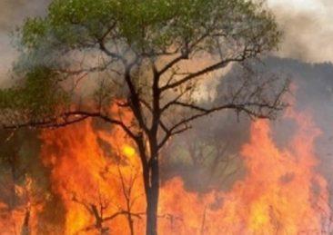 incendio albero