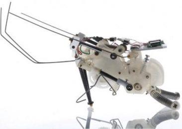 insetti_robot_1