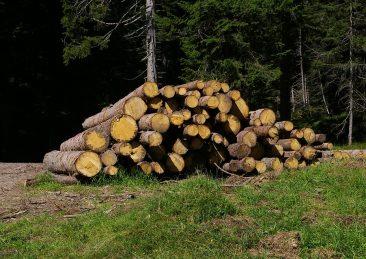 legno_tronchi3