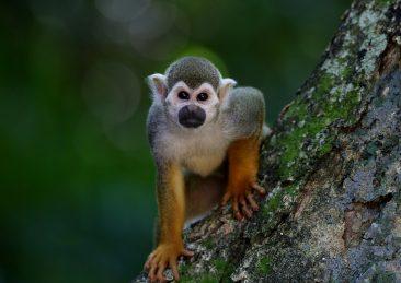monkey-1197100_960_720