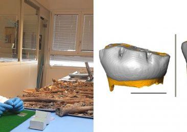 neanderthal-svezzamento