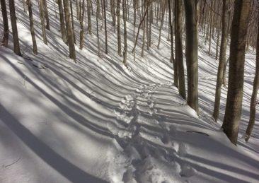 orme nella neve