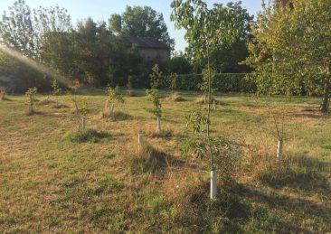 nuovi-alberi