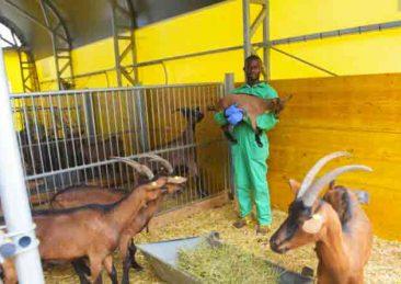 okKwabena-nel-caprile