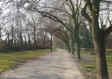 parco Bologna alberi verde
