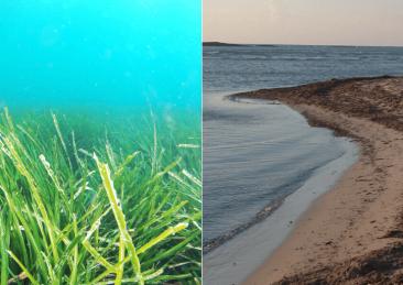 posidonia-alghe-spiagge