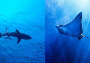 squalo_razza
