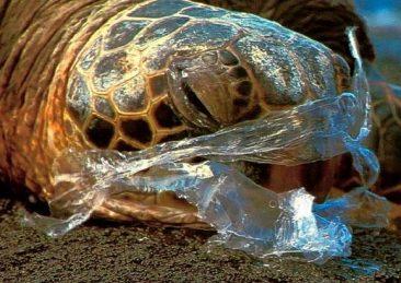 tartaruga_plastica_oceano_inquinamento