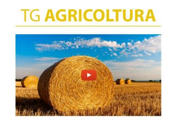 tg agricoltura