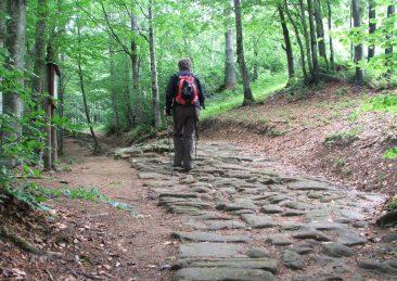 trekking sentieri bosco camminate montagna2