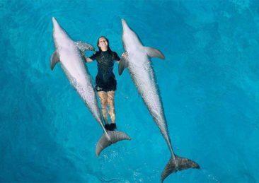 zooomarine3_delfini