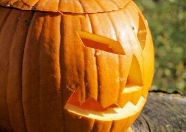 zucca_halloween-700-x-467